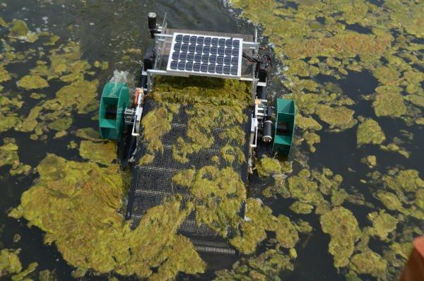 Waterbug Conveyor