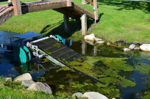 Waterbug Narrow Canal